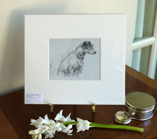 Pencil sketch of terrier head - Ter S2 - 1980's print by Snaffles